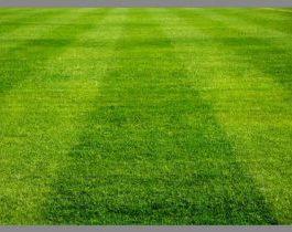 Semilla Rye Grass Perenne Lin 25 Kilos