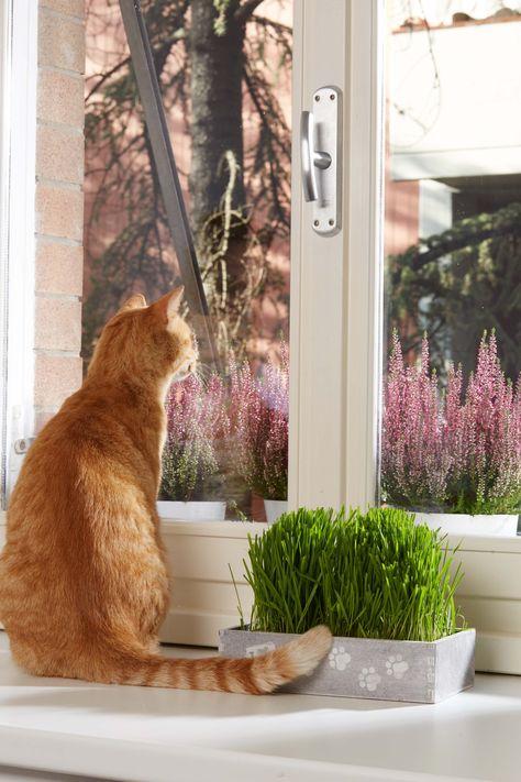 Hierba de gato Huertos alma
