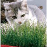 Kit de Cultivo de Hierba de Gato