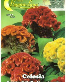 Semillas De Celosia Cresta De Gallo Enana Mix