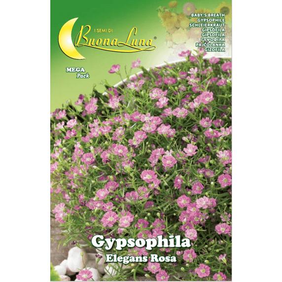 Gypsophila Elegans Rosa