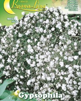 Semillas De Gipsofila Paniculata Perenne Doble