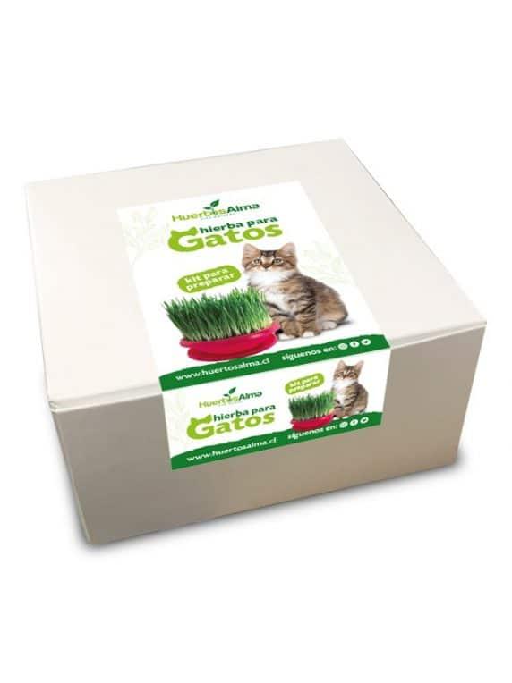 Kit de Cultivo de Hierba de Gato - Huertos Alma
