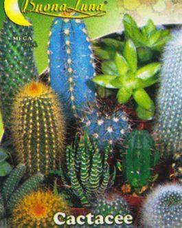 Semillas De Cactus Variado