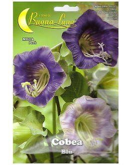 Semillas De Cobea