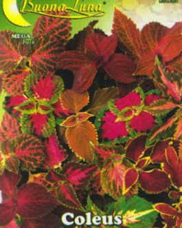 Semillas De Coleus Arcoiris Mix